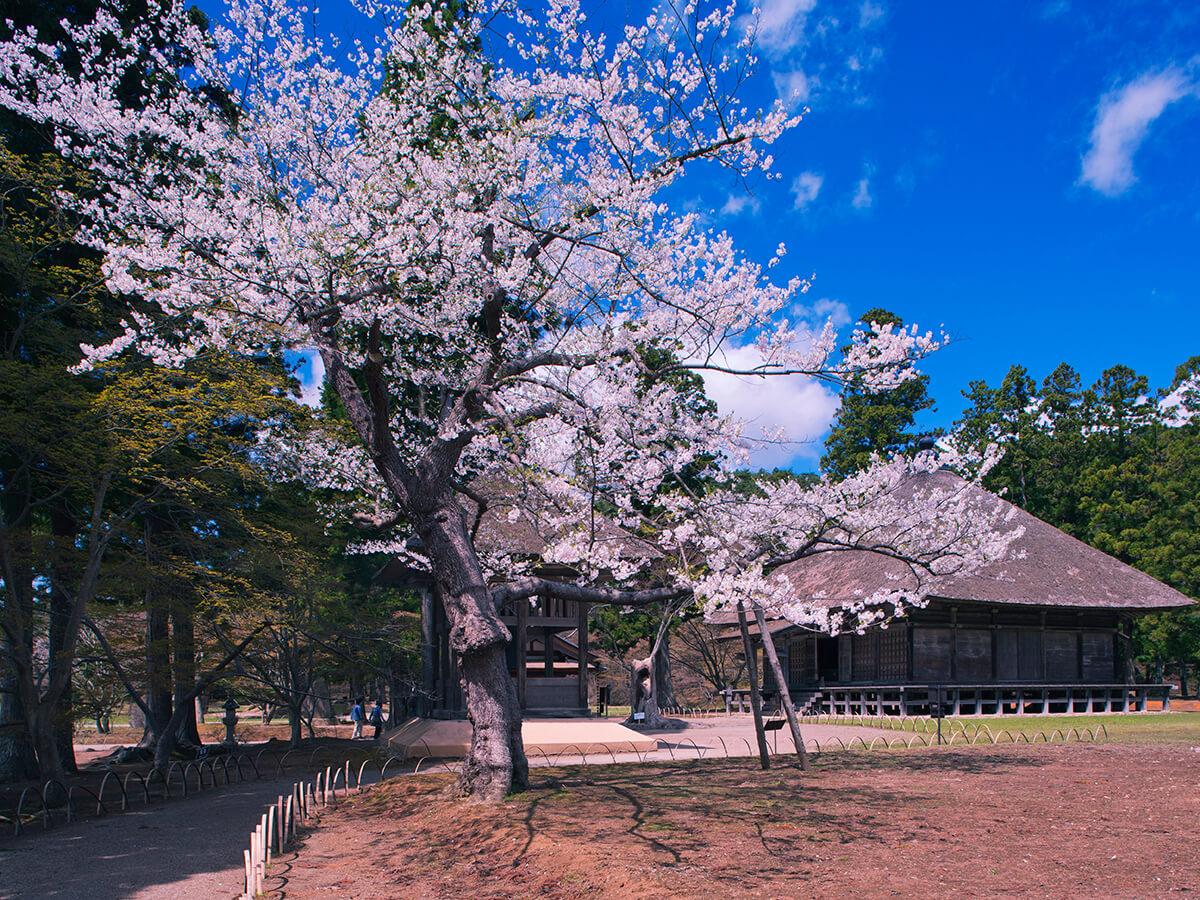 Motsu-ji Temple