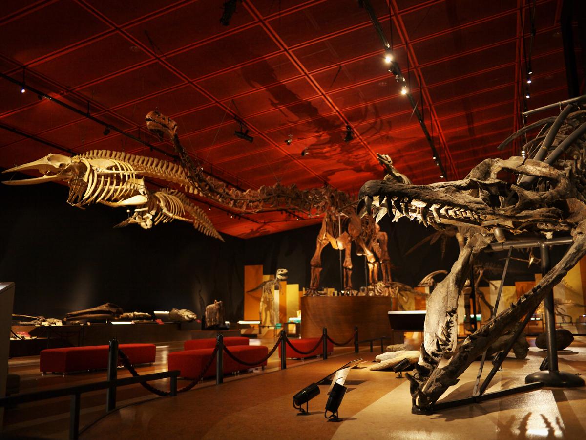 Musée du charbon et des fossiles d'Iwaki