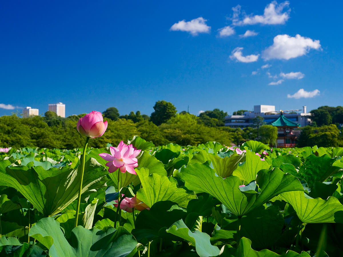 Ueno Park_2