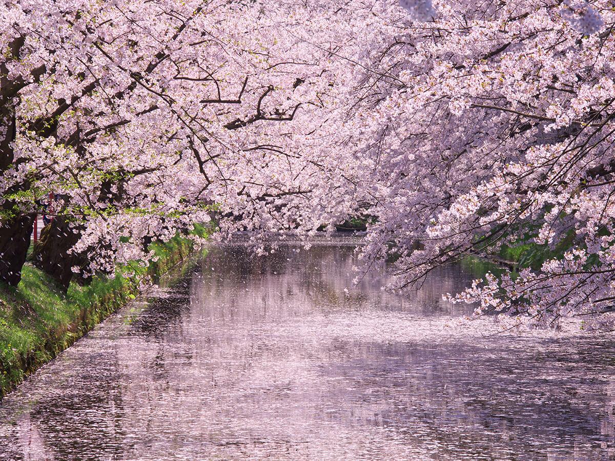 Hirosaki Park_2