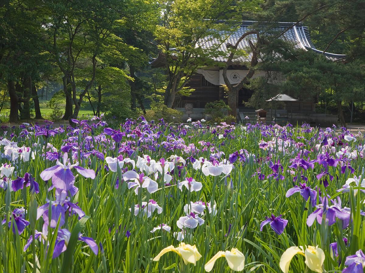 Motsu-ji Temple_2