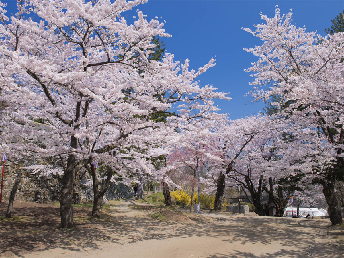 Morioka Castle Site Park (Iwate Park)_2