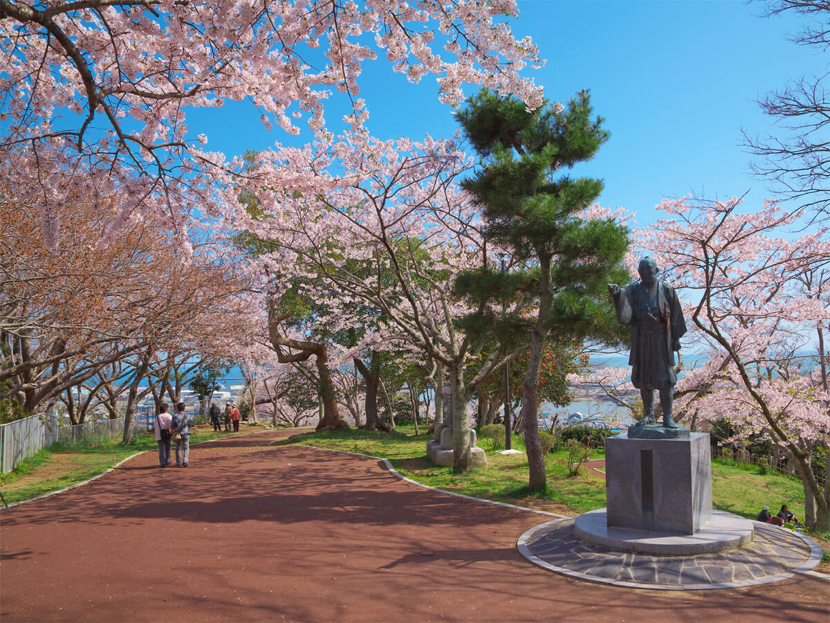 Cherry Blossoms in Hiyoriyama Park_3