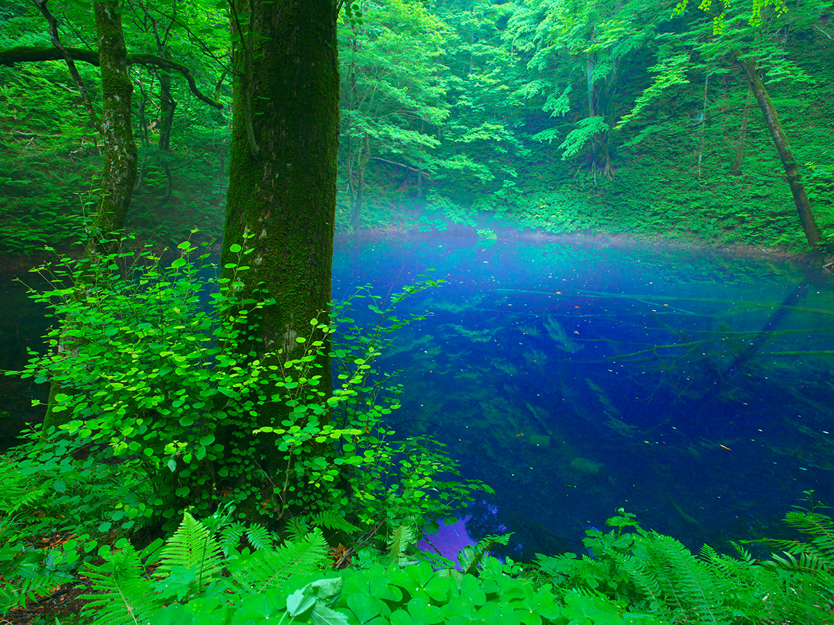 World Natural Heritage Site, Shirakami-Sanchi_4