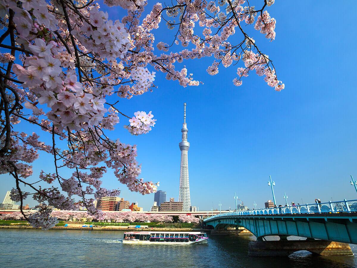 Croisières à Tokyo, ligne Sumidagawa_1