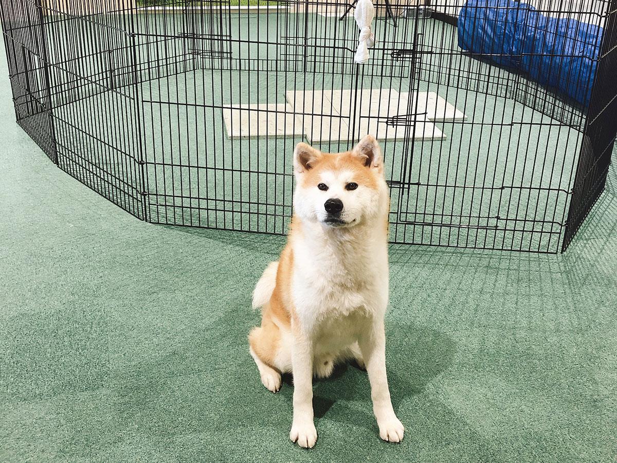 ศูนย์เยี่ยมชมสุนัขอาคิตะ (อะคิตะอินุโนะซาโตะ)_1