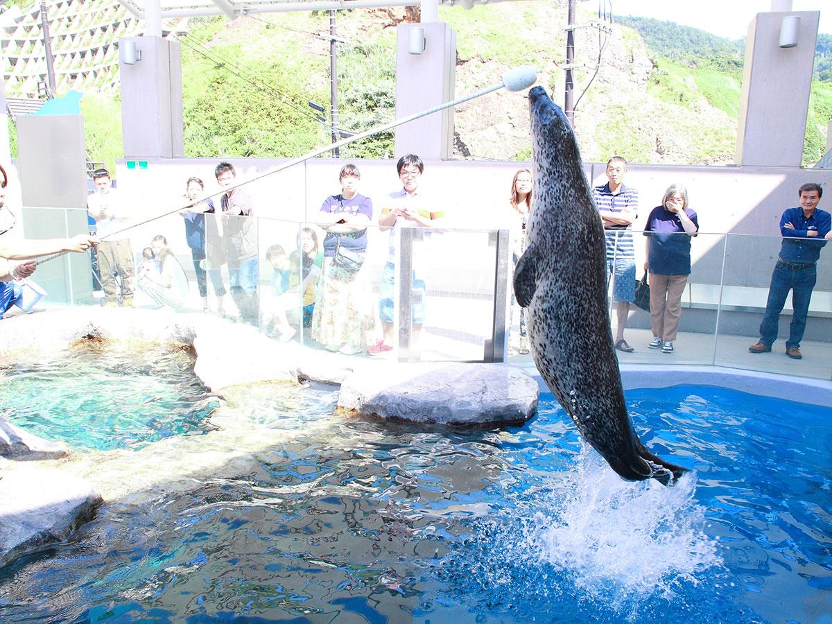Oga Aquarium GAO_3