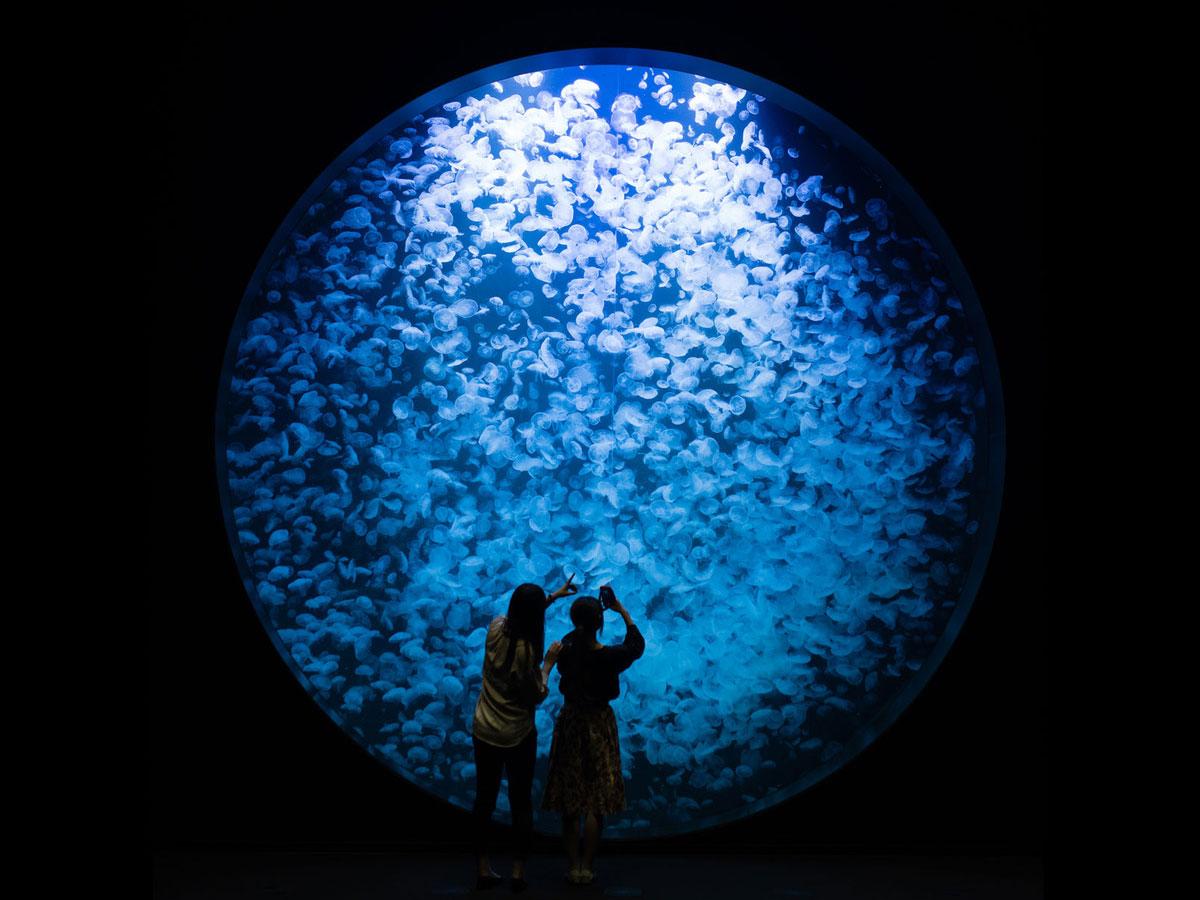 Aquarium de Kamo