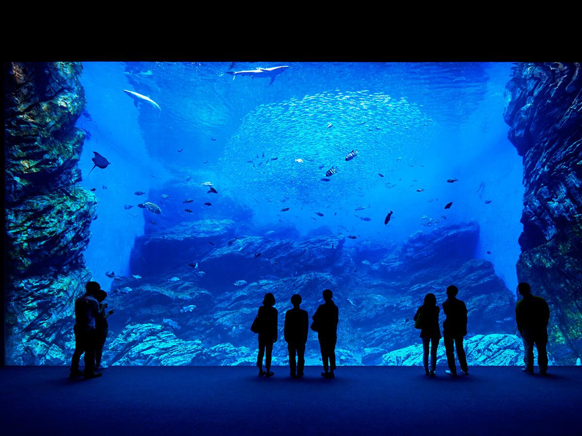 Sendai Umino-Mori Aquarium/Mitsui Outlet Park_1