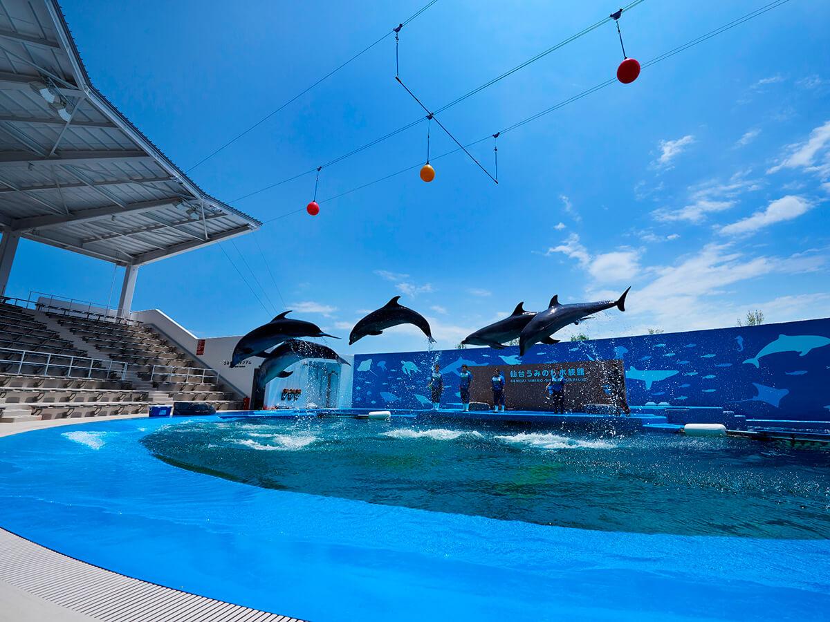 Sendai Umino-Mori Aquarium/Mitsui Outlet Park_2