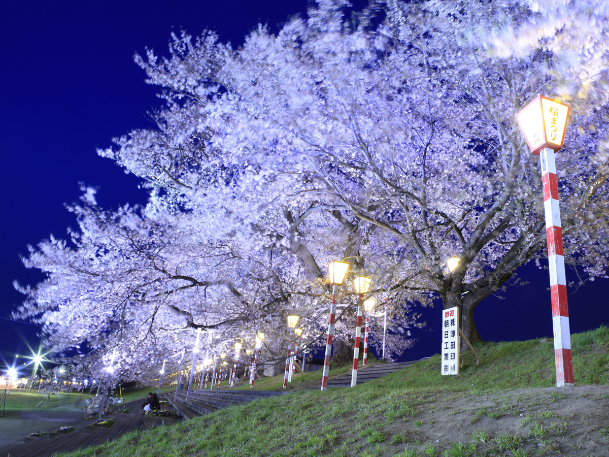 Hitome Senbonzakura (1,000 Sakura trees at a glance)_3