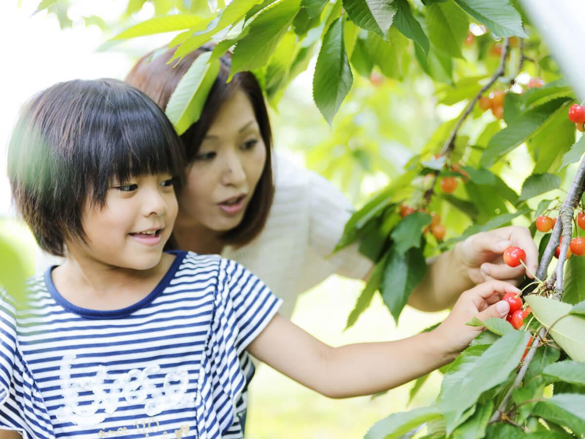 Frutteto panoramico di Kaminoyama_2