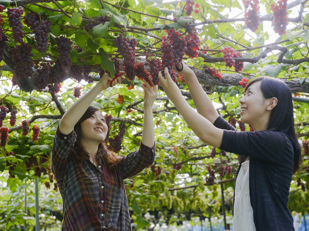 Kaminoyama City Sightseeing Fruit Orchard_3