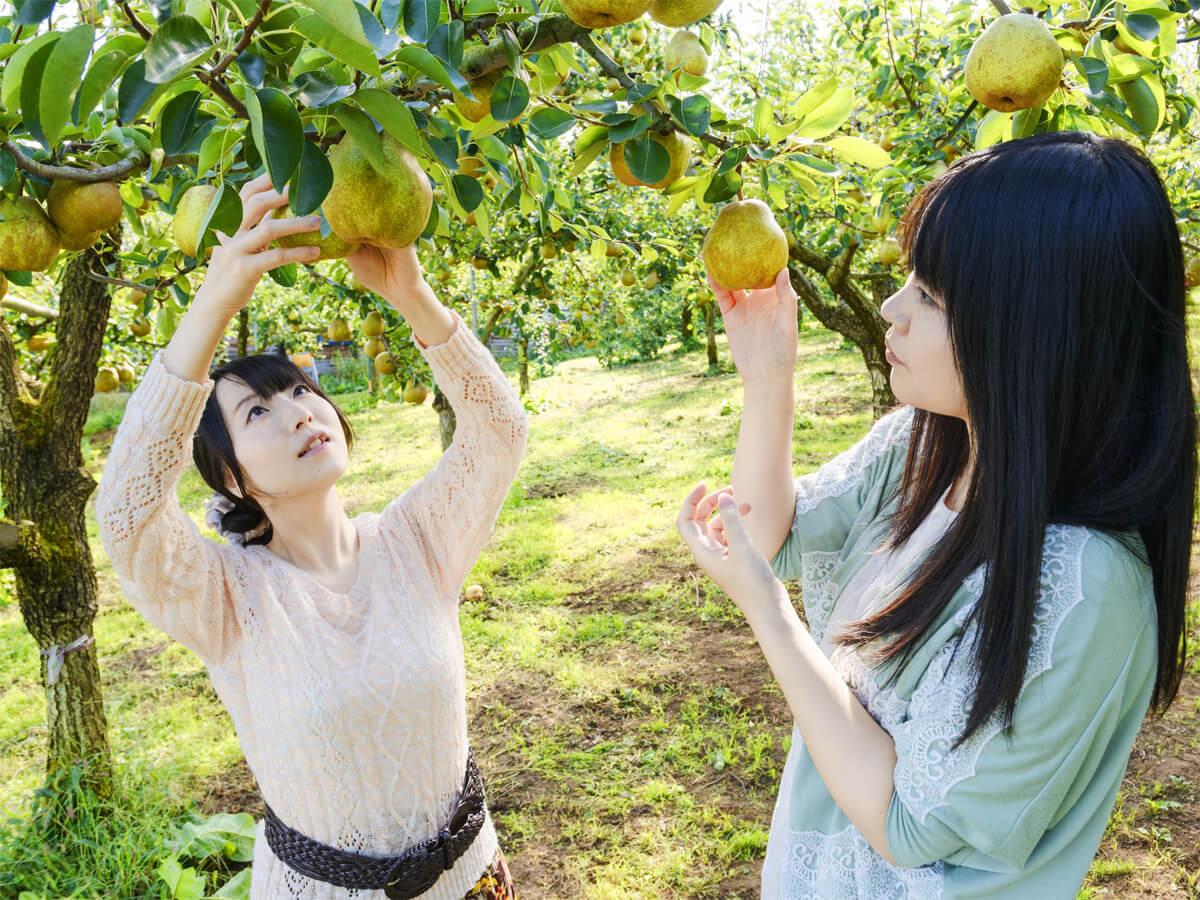 Frutteto panoramico di Kaminoyama_4