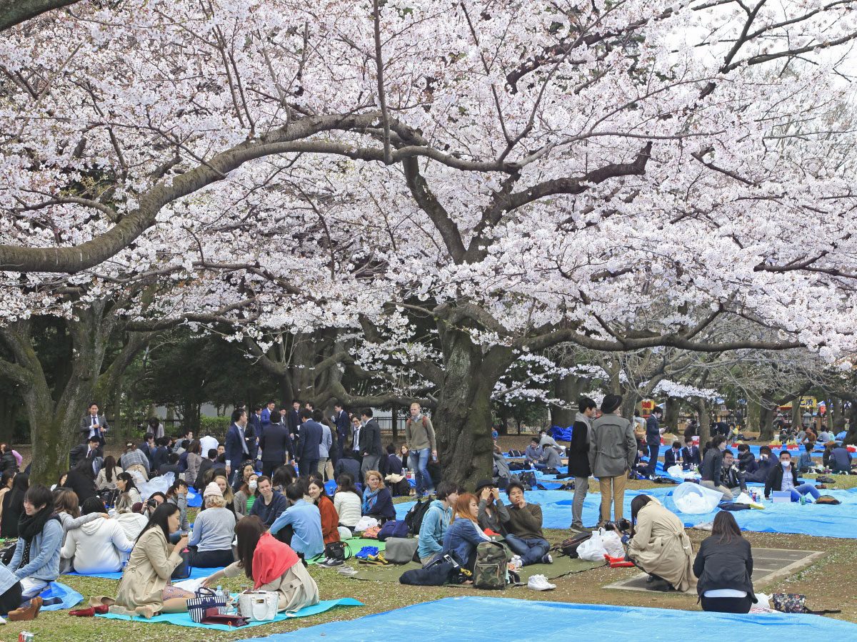 Yoyogi Park_4