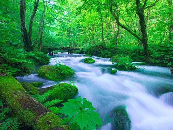 Ruisseau d'Oirase