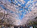 Ueno Park_1