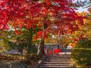 Morioka Castle Site Park (Iwate Park)_1