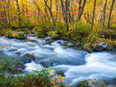 Oirase Mountain Stream _2