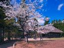 Motsu-ji Temple_1