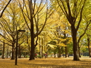 Quartier de Tomigaya_4