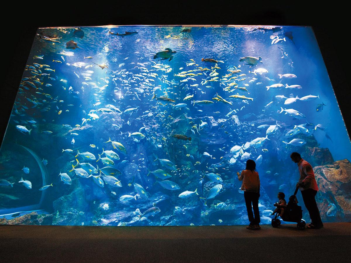 Oga Aquarium GAO_1